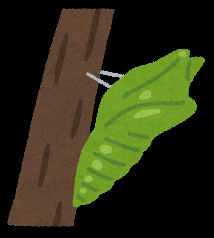 bug_sanagi